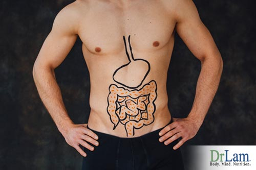 Benefits from probiotics on the digestion system