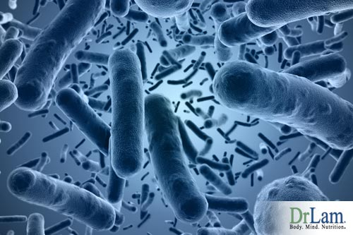 Microbiome: Healthy Gut Bacteria and Adrenal Fatigue Syndrome