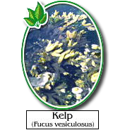 among the herbs kelp is one that may not be the best