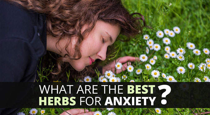 Valerian root is part of the anti anxiety herbs family