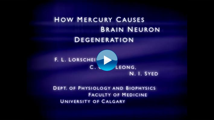 This video is from the University of Calgary. It shows how mercury kills brain neurons. Using live brain cultures, the mercury is introduced and the cells die. Vaccines contain mercury called thimerosal.