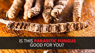 Is This Parasitic Fungus Good For You?